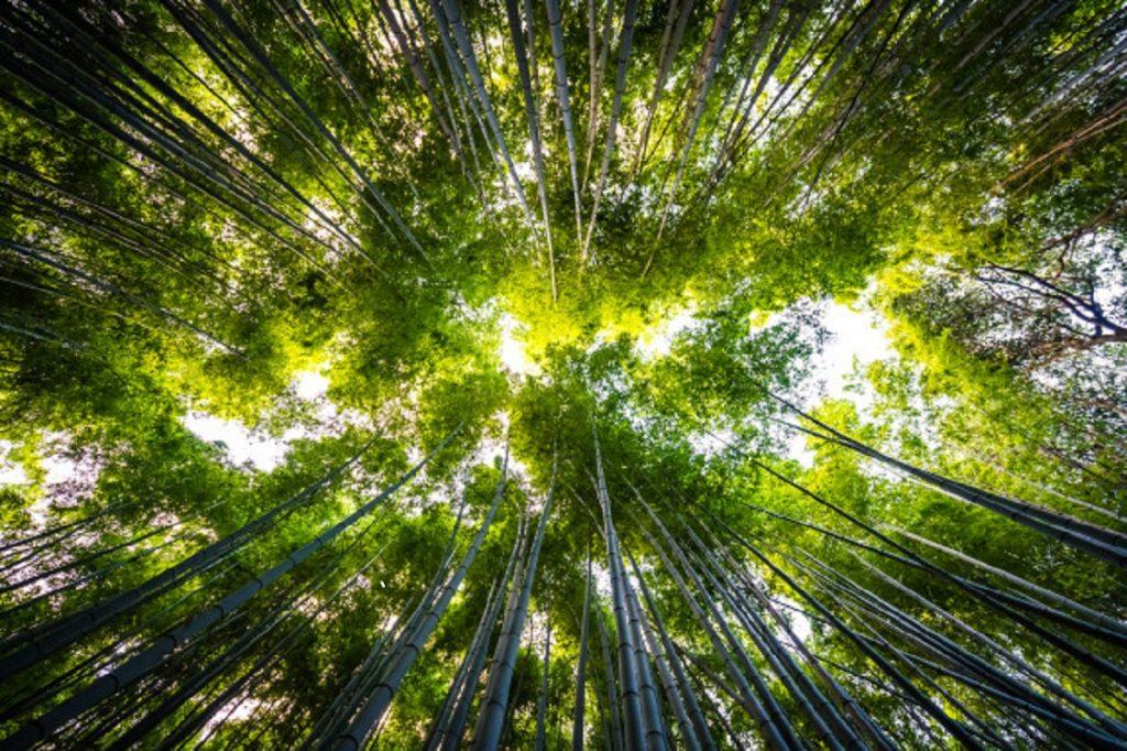hermoso-paisaje-arboleda-bambu-bosque-arashiyama-kyoto_74190-2264
